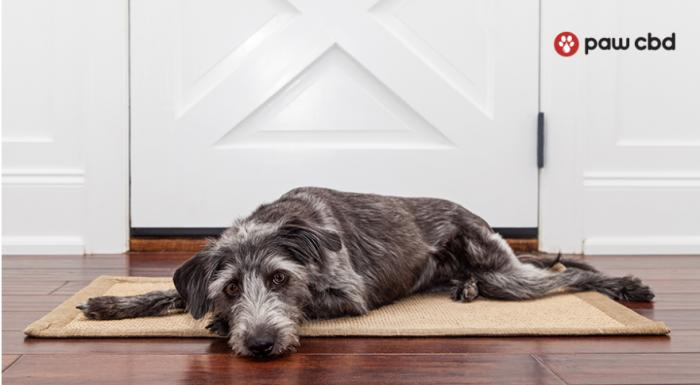 Unhappy Hound? Dealing with Your Dog's Separation Issues